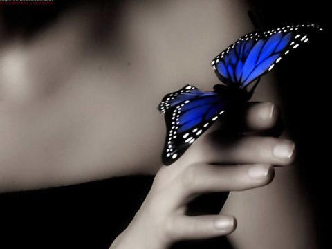 pillango lehetnek kezben