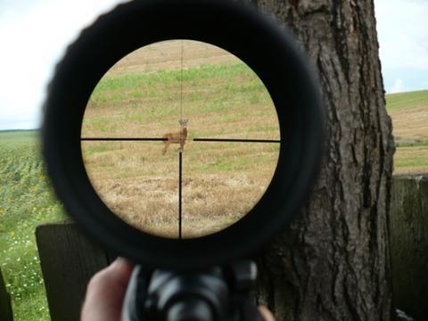 cekeresztben vad tavcso fegyver puska vadasz
